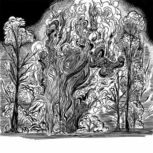 A Forest in a Fire